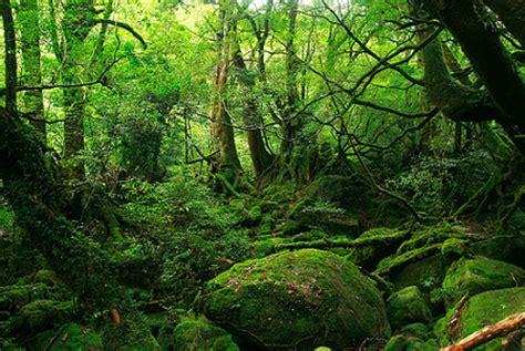 imagenes de bosques otoñales los bosques en el jap 243 n