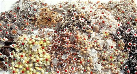 Kulit Kerang Laut bros cangkang kerang kerajinan tangan unik hasil laut