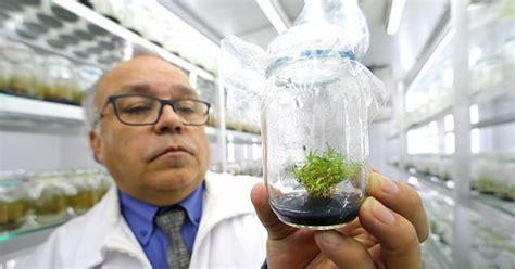 Tabir Surya Di Apotik keren tumbuhan ini dimanfaatkan sebagai tabir surya