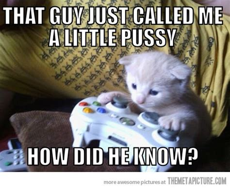 Pussy Cat Meme - funny cat games 4 hd wallpaper