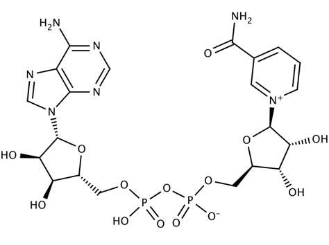 glentham life sciences gv0860 beta nicotinamide