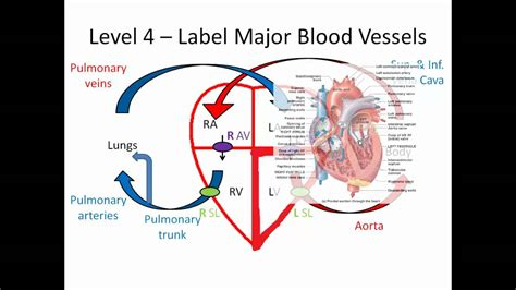 blood flow through the diagram step by step blood flow through the made easy part 2 of 3