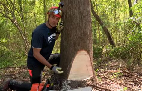 how to cut a tree how to cut a tree with a chainsaw the cutting