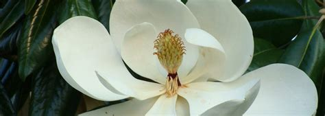 magnolia funeral home hartford al funeral home and cremation