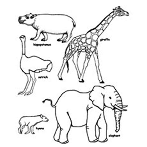 wild animals coloring pages preschool printable colouring pages of wild animals printable pages