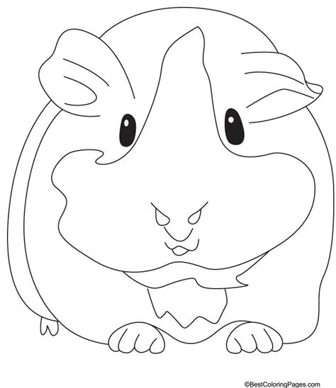 guinea pig coloring pages free printable guinea pig coloring page coloring home