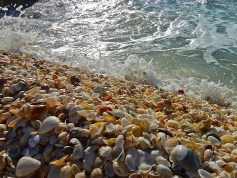 best beaches for seashells on top of shell mountain i shelling