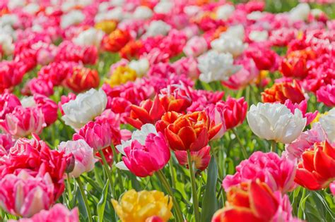 bright vivid flowers free stock photo public domain pictures