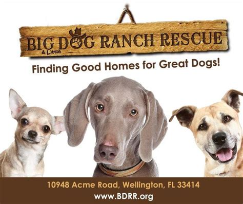 big ranch rescue about big ranch rescue