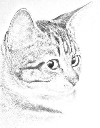 regarder oscar et le monde des chats regarder streaming vf en france dessin en hommage a mon chat quot mort quot cette idiot a pas