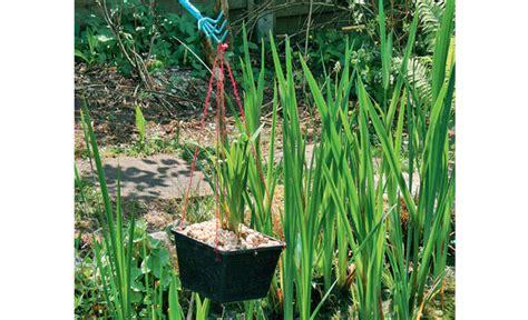 Garten Teich Pflanzen by Teichbepflanzung Teich Anlegen Selbst De