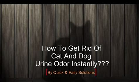 how to get rid of pee smell in bathroom how to get rid of cat and dog pee smell instantly with