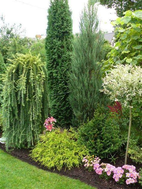 Conifer Garden Ideas мой сад 2012 60 фотографий Beautiful Conifer Shrub Tree Plant Combinations And