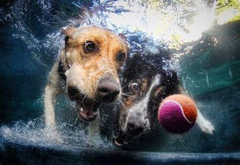 alimenti cani cruelty free alimenti per animali cruelty free alimentazione trainer