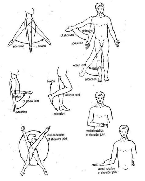 anatomical position diagram basic anatomical terms human anatomy