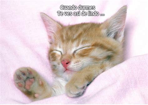 imagenes tiernas motivadoras 78 im 225 genes bonitas de gatitos tiernos y divertidos para