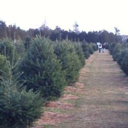 christmas trees mattituck ny zouaves shamrock tree farm 193 rboles de navidad 20685 rd mattituck ny estados unidos