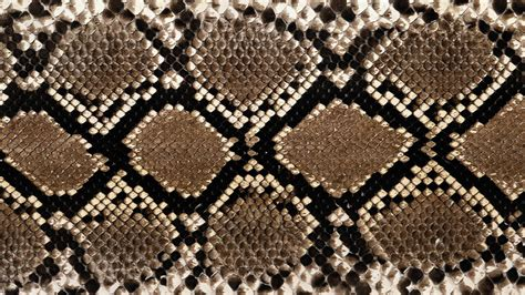 pattern design in python wallpaper snake pattern scales snakeskin