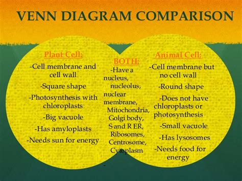 venn diagram of animal cell and plant cell 6 1 visuals power point