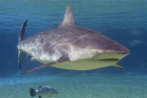 are sharks color blind are sharks color blind