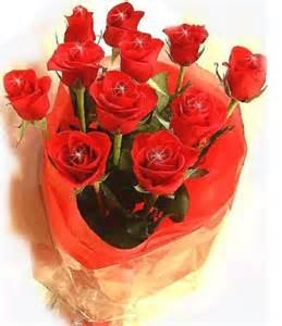imagenes de rosas rojas en movimiento fotos de rosas rojas animadas y con movimiento imagen de