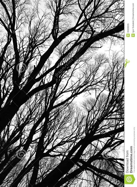black and white tree pattern tree silhouettes isolated stock image image of wallpaper