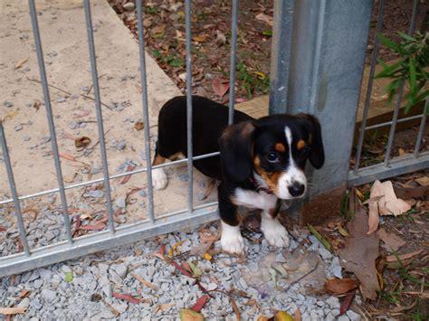 stuck auf puppy stuck in the fence teh