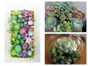 She Sheds Pinterest 5 beautiful ways to use succulents sam loves adventure