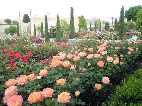 El Paso Municipal Garden by El Paso Municipal Garden El Paso Master Gardeners