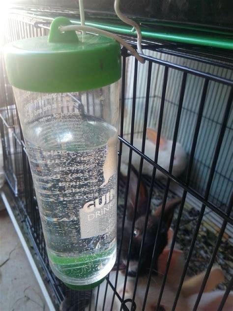 Membuat Botol Minum Hamster jual botol tempat minum 250ml untuk kelinci hamster tikus