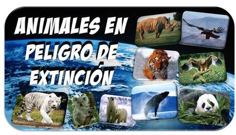 imagenes los animales en peligro de extincion animales en peligro de extinci 243 n