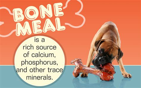 bone meal for dogs a question that bugs all owners is bone meal for dogs