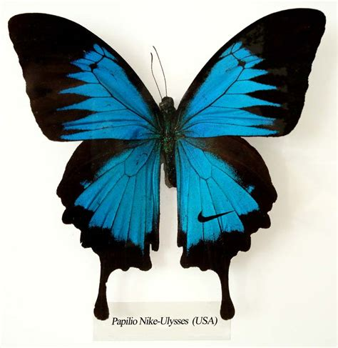 Butterfly Wings in the wilderness 2008