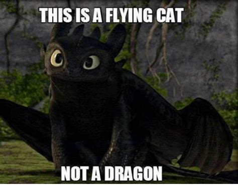 Flying Cat Meme - 25 best memes about flying cat flying cat memes