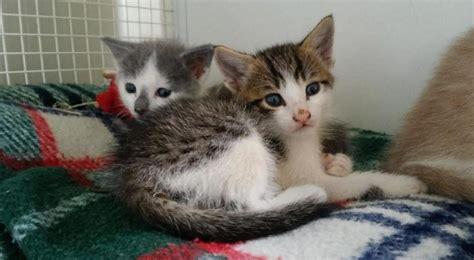 canile di pavia cuccioli pavia gattini di un mese abbandonati al cimitero l enpa