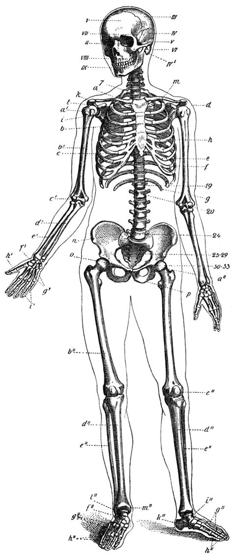 All of the Body's Joints are Reciprocal