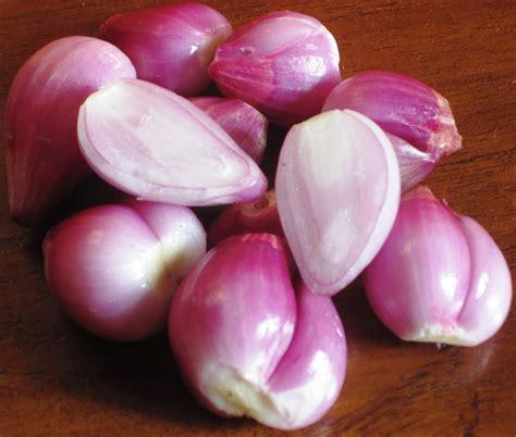 film bawang merah bawang putih episode 1 bawang merah bawang putih top google und bing images for