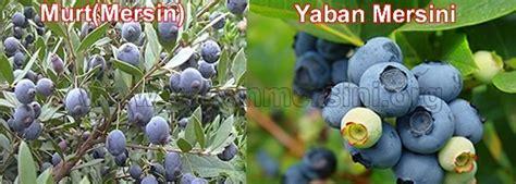 Cranberry 100 Gr Blueberry 100gr organik yaban mersini kurusu