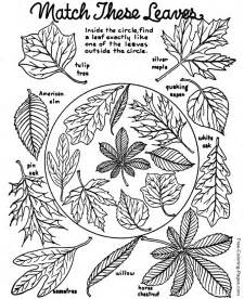 free coloring pages autumn fall autumn or fall coloring book pages 12