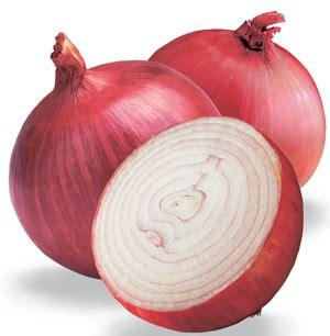 onion medicinal herb info onion medicinal herb info