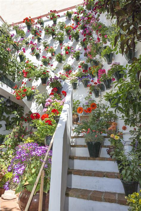 plantas para patio fotos gratis flor primavera verde patio interior