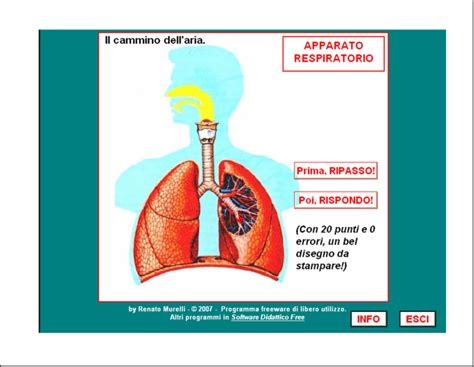 test apparato respiratorio verifiche matematica scuola primaria segnalo l apparato