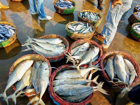 Tepung Ikan Pakan Ternak Dijual laut mongabay co id page 3