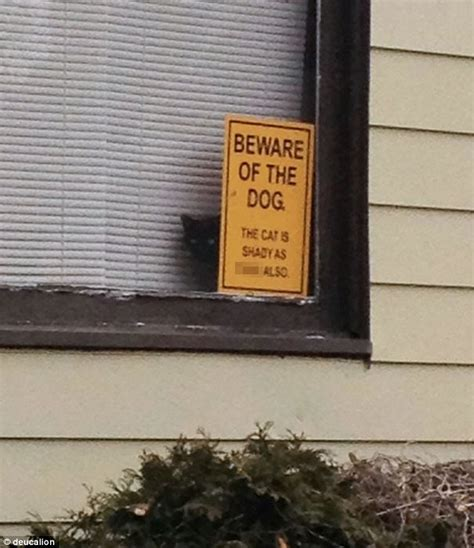 signs of pomeranian dying beware of the pomeranian hilarious photos of friendly guard dogs undermining
