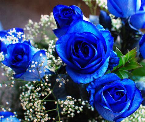 Dew Drops Blue Flowers Blue Flower