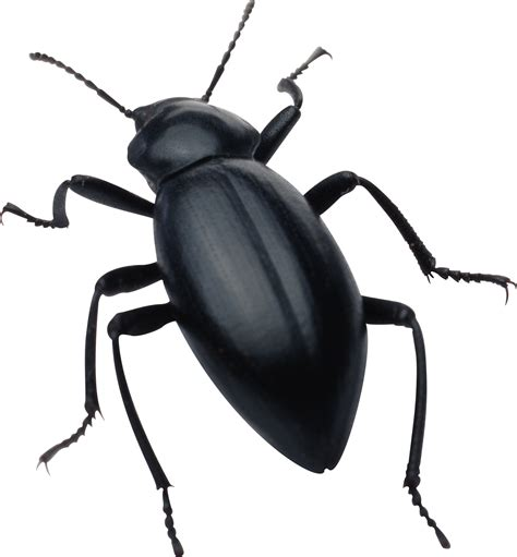 a picture of bed bugs bugs png images free pictures bug png