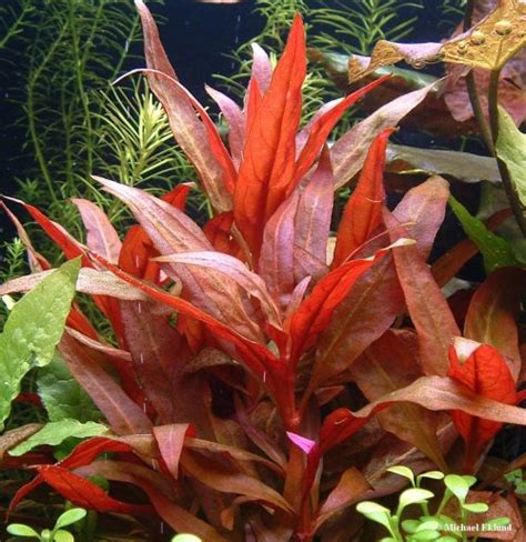 Best Low Light Aquarium Plants growth rate medium