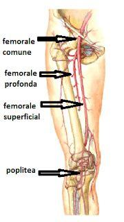 lacuna dei vasi a anatomia ecocolordoppler