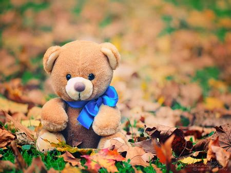 wallpaper desktop teddy bear lonely teddy bear other abstract background wallpapers