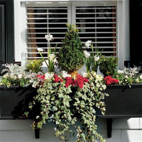 window boxes for plants cottage flavor window boxes abloom